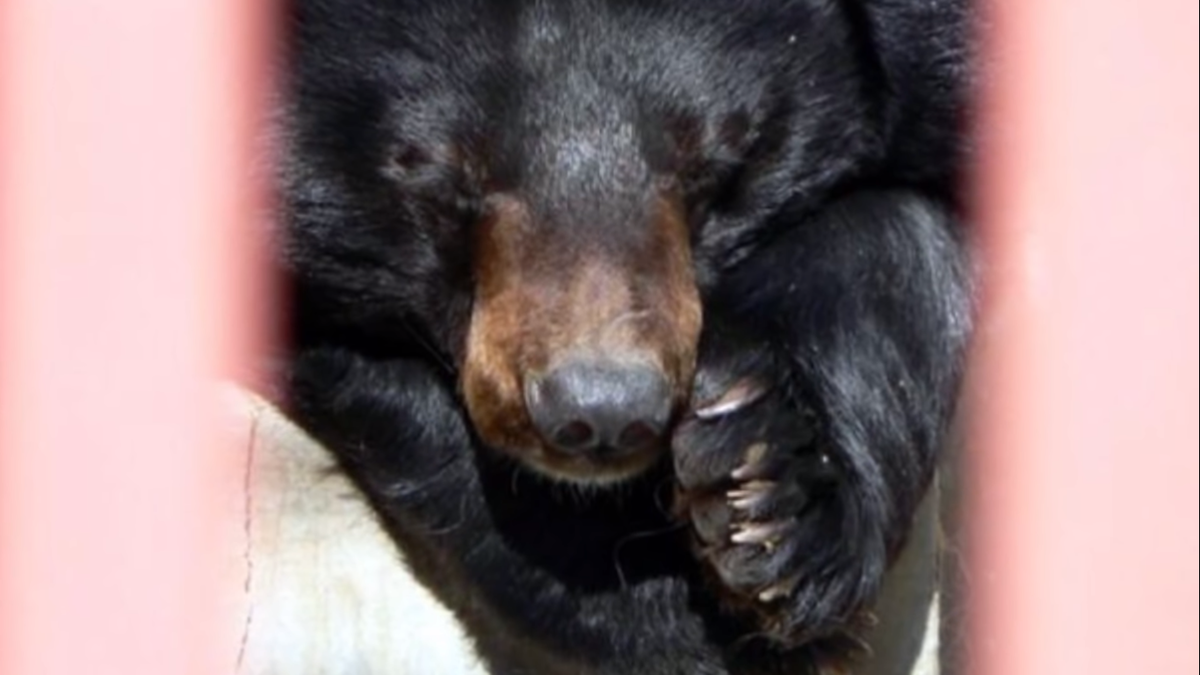 Медведица не могла спасти медвежат из холодной воды, но рядом оказались рыбаки