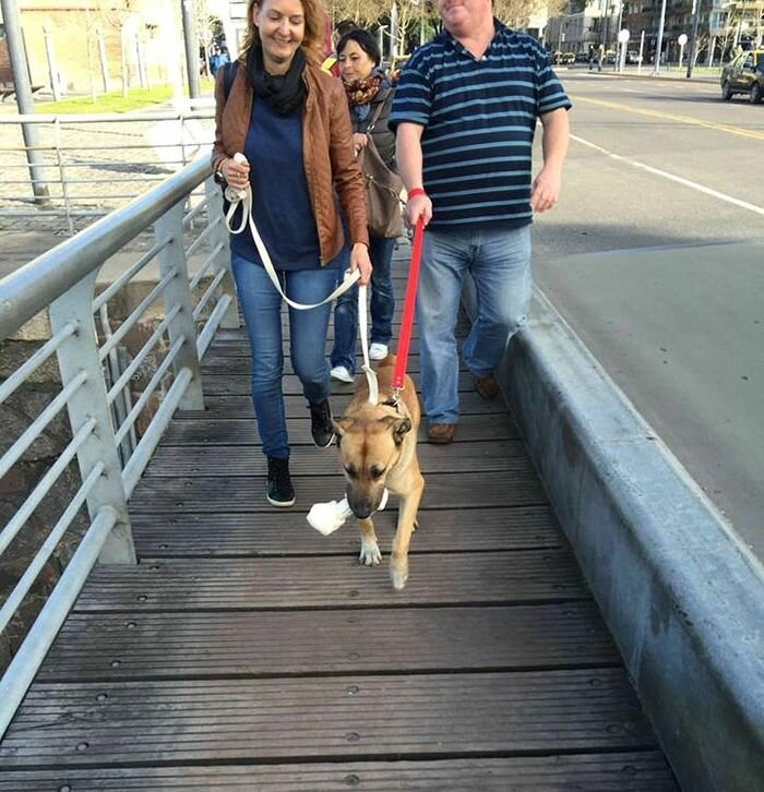 Стюардесса подобрала бездомного пса, который 3 месяца ждал её у аэропорта