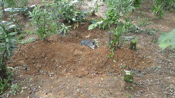 grieving cat рис 2