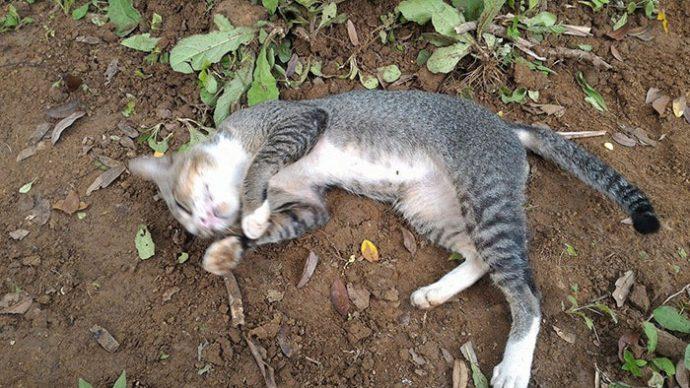 grieving cat